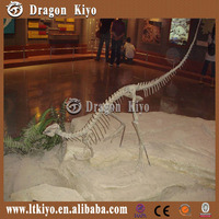 Dragon Culture 2016 Dinosaur Skelenton for park