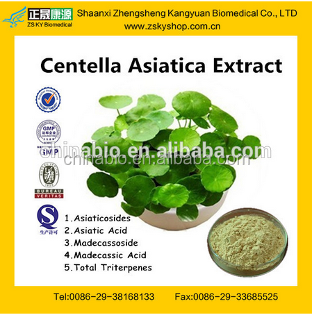 GMP Factory Supply Natural Gotu Kola Extract Asiaticoside