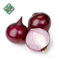 fresh red onion packed by mesh bag