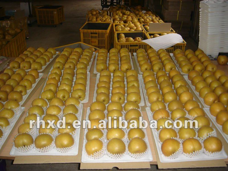 Chinese organic pears export to many countries