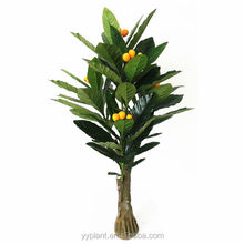 0582-kumquat hybrid fruit trees