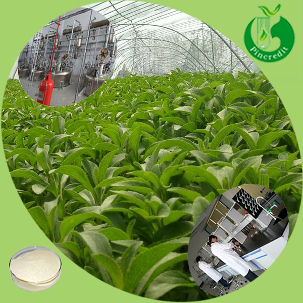 Lowest stevia powder price bulk pure stevia extract