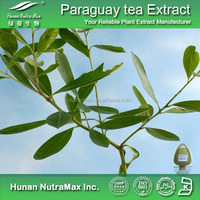 Hot sale Plant extract Yerba mateherb extract/Yerba mate leaf powder extract/Yerba mate extract