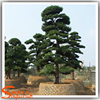 /product-detail/sale-off-japanese-100-fiberglass-branches-and-plastics-leaces-made-of-artificial-pine-tree-60539081951.html