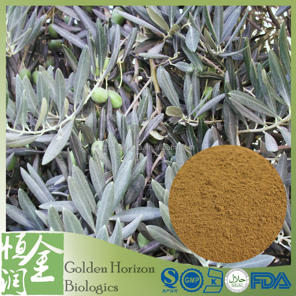 100% Natural Organic Olive Leaf Extract Chinese Herb