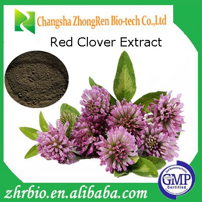 GMP Factory Pure red clover tea Red Clover Extract Powder Total Isoflavones