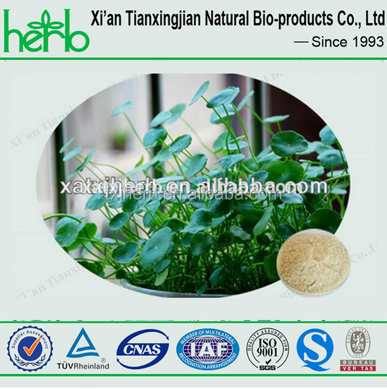herbs cosmetic centella asiatica extract powder