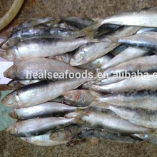 chinese supplier fish process canning frozen sardines for sale