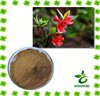 12:1 natural rhododendron p.e. powder extract for sale