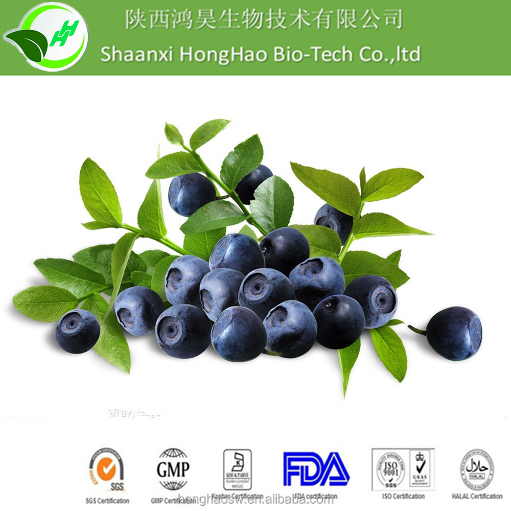GMP Manufacturer Supply Bilberry extract/Blueberry Extract 25% Anthocyanosides powder