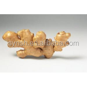 Factory Supply natural Ginger extract