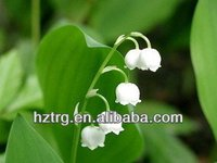 high quality polygonatum odoratum druce extract