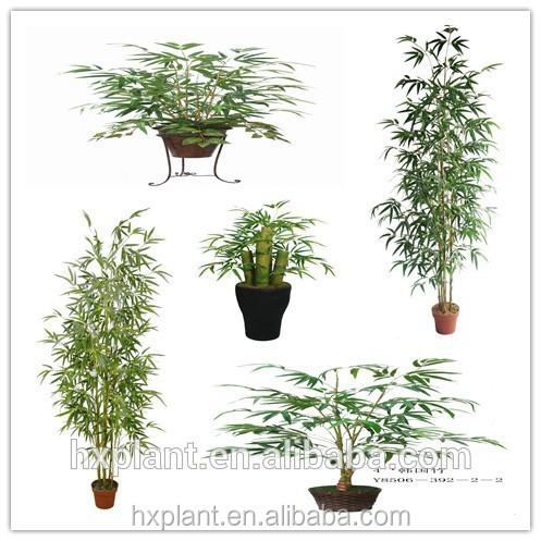 Hx bambou plant simulatie bamboos plant planten for Bamboe plant