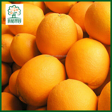 Bulk navel oranges fresh