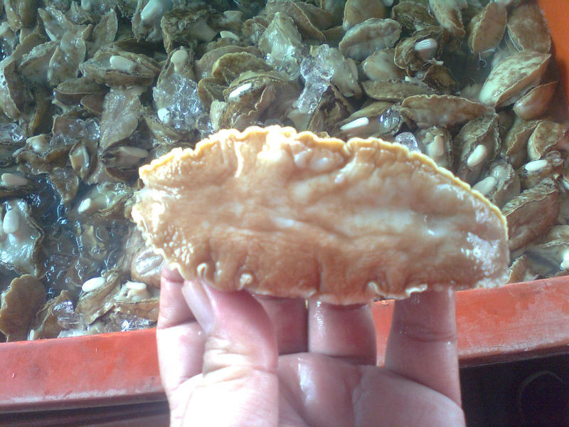 Frozen Abalone Meat