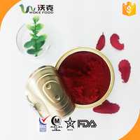canned tomato paste 18-20% brix tomato puree