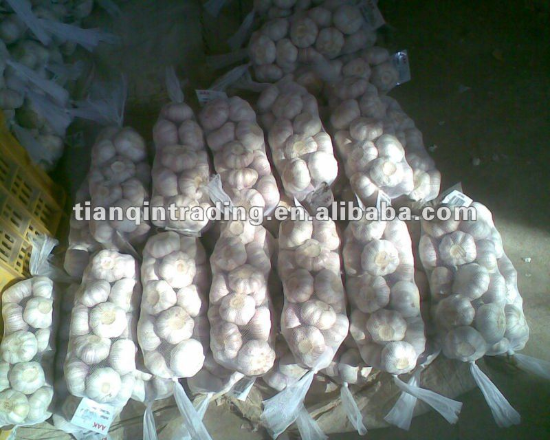 Pure White Garlic 2012