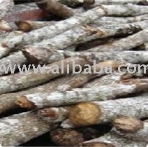 Eucalyptus wood Logs for pulp and paper