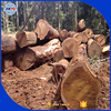 Wood logs from Africa wood logs Kosso Doussie Tali logs