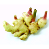 chinese fresh vegetable new crop fresh ginger supplier