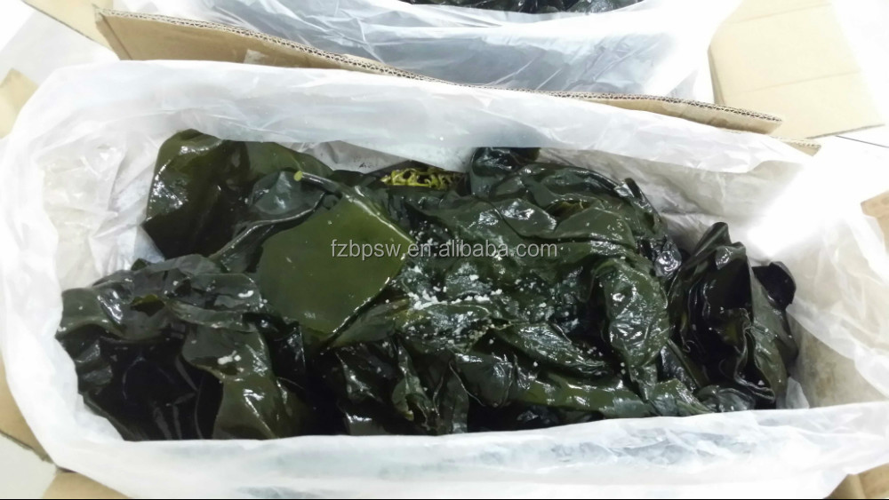 Fresh salted algue sea kelp, kelp knot