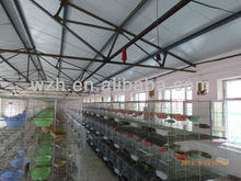 light steel structure--poultry/chicken/birds/pigeon farms from Weizhengheng Light Steel Group in China,best quotation!!!