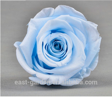 Perfect Quality preserved eternal blue rose of Bottom Price