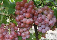 bulk fresh fruit talbe inflatable grapes prices
