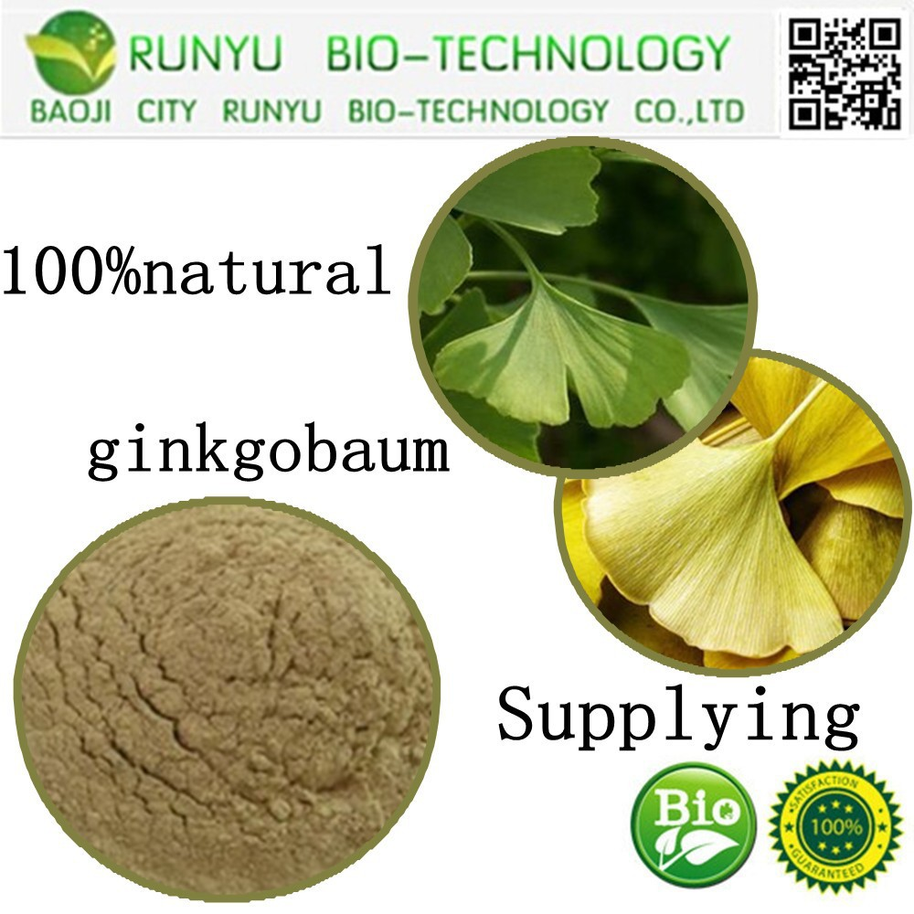 Total Ginkgo Flavone Glycosides >24.0%Total Terpene Lactones>6.0% ginkgobaum