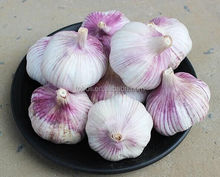 Chinese Fresh Solo Garlic for Europe Market