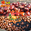 Organic Fresh Chestnuts Castanea Sativa Whole Chestnut
