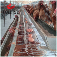 Breeding Layer Battery Chicken Cage System For Poultry Farm