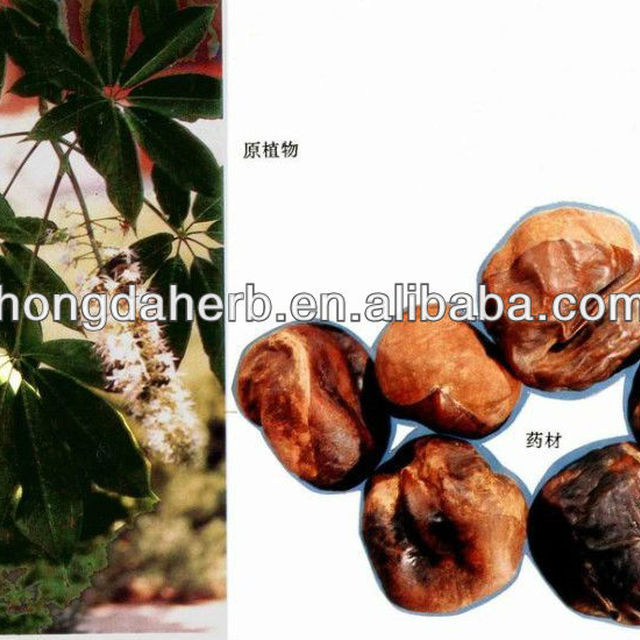 Hot Sale Horse Chestnut Plant Extract