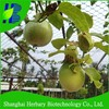 Tropical fruit seeds passion fruit seeds for growing