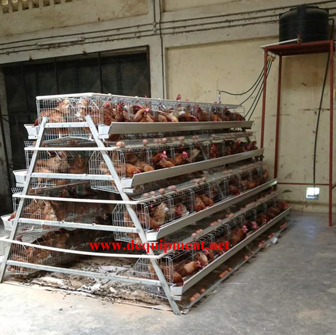 USD 800 coupon free sample chicken layer cage for Kenya