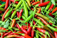 Organic Fresh Bird Chilli Red & Green