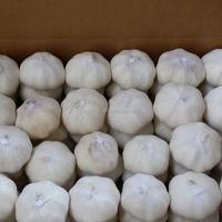 Fresh garlic price per ton in china