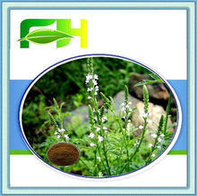 100% Natural Blue Vervain Extract