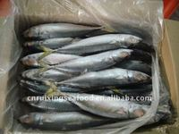 Mackerel Chilled Sea Food