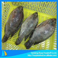frozen seafood supplier sell all types of cheap tilapia fish