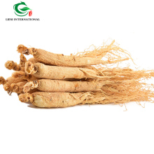Chinese Dried herbs /Herba bulk ginseng/wholesale ginseng tea/raw ginseng Grade A