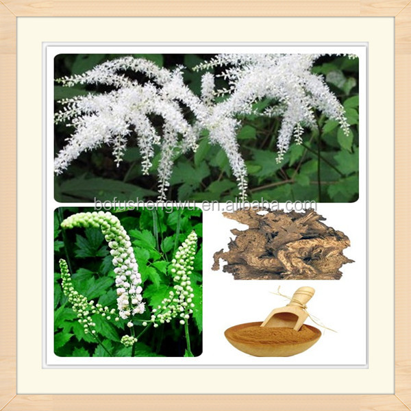 natural black cohosh extract/black cohosh plant extract/high quality black cohosh extract