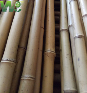 Natural yellow color bamboo poles for import