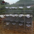 The Best Selling Pigeon Breeding Cages For Saudi Arabia Market