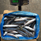 Mackerel Prices Block Frozen Pacific Mackerel Fish Seafood for sale