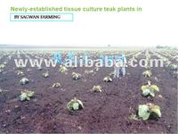 Earn millions with teak plantation as frenchisee in india states