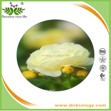 high quality top quality cistus incanus extract/rock rose ext of Higih Quality