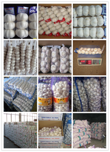 Grade A Fresh White Garlic with All Kind of Package