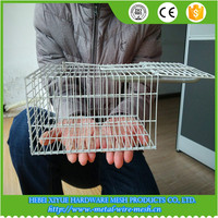 PVC coated Wire Mouse Cage /mice trap box (factory)