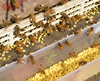 high quality organic fresh 100% natural bee pollen (from the largest bee industry base of china)